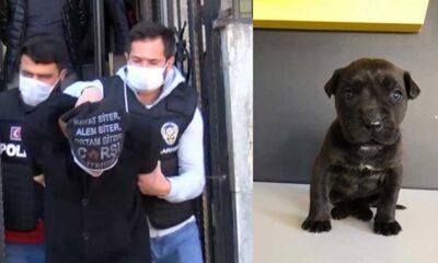 Yavru köpeği öldüren kişiye üç yıla kadar hapis istemi