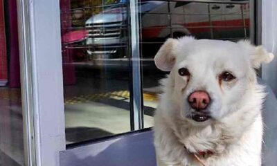 5 gün boyunca hastane kapısında bekleyen köpek sahibine kavuştu