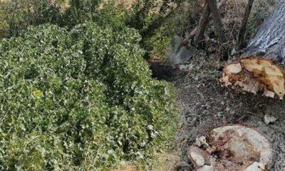 Adana'da kestiği ağaç üzerine düşen kişi hayatını kaybetti