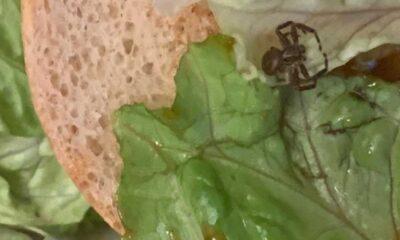Araknofobisi olan kadının McDonald's hamburgerinden örümcek çıktı
