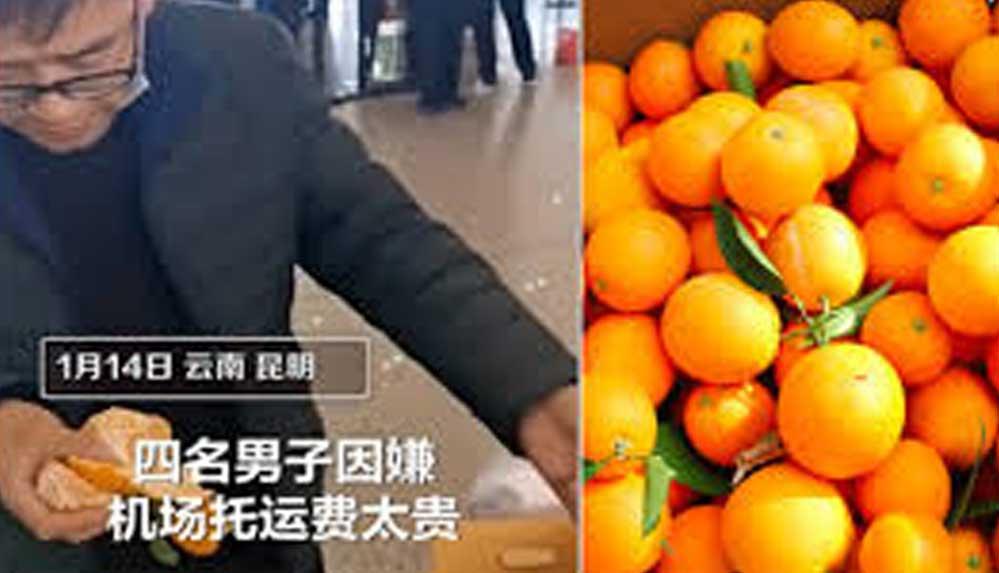 Ekstra bagaj ücreti vermek istemeyince 20 dakikada 30 kilo portakalı yediler