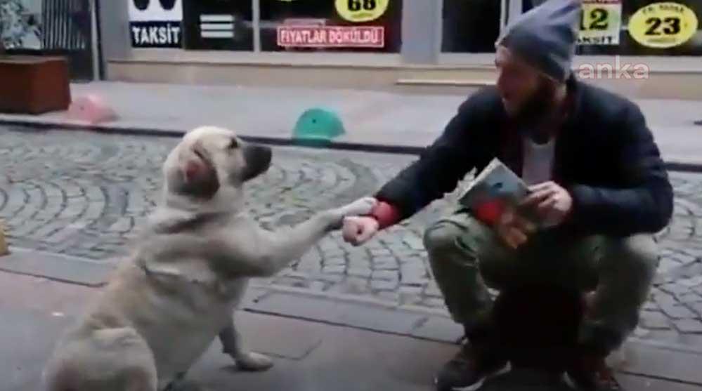Hayvan sevgisi ve hoşgörünün resmi Fındıklı'dan