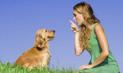 Hayvanlarla konuşmayı ne zaman öğreneceğiz?
