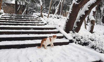 İstanbul'a yine kar geliyor