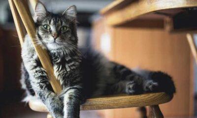 Kayıp kedisini bulmak için askeri teçhizat ile hayvan barınağını bastı