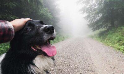 Köpeklerin ilk kez ne zaman ve nerede evcilleştirildiği bulundu