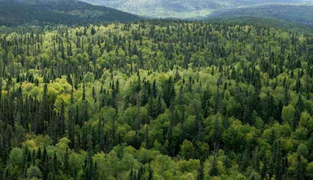 Ormanlar imara açılıyor!