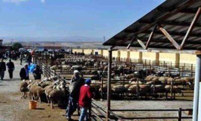 Şap hastalığından Kırşehir'deki canlı hayvan pazarı kapatıldı