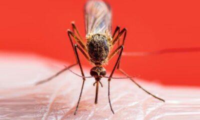 Sivrisinek popülasyonu etkilendi, İstanbul'da Ocak'ta bile görülüyor