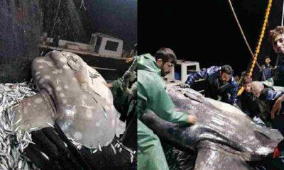 Adana'da nadir görülen 'ay balığı' balıkçıların ağına takıldı!