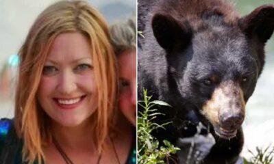 Alaska'da bir kadına tuvalette ayı saldırısı: Oturdum ve bir şey anında popomu ısırdı