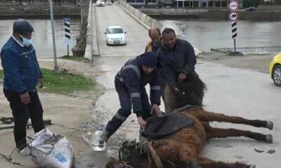 Aşırı yüke dayanamayan at yere yığıldı: Sahibi başına su döküp kuyruğundan sürükledi