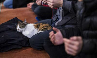 """Dünya Kediler Günü'nde """"İmamlar kedi sahiplensin"""" önerisi"""
