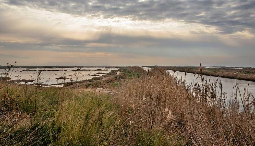 Dünya Sulak Alanlar Günü'nde uzmanlardan uyarı: Sulak alanlar kuruyor