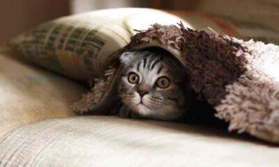 Dünya Kediler Günü: Türkiye'nin yüzde 19'u evde kedi besliyor