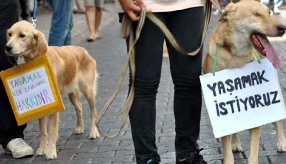 """""""Hayvan haklarına dair kanunu çok kısa sürede tamamlayacağız"""""""