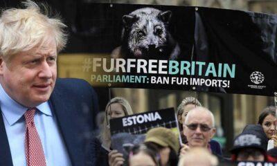 """İngiltere Başbakanı Boris Johnson'a sanatçılardan """"kürkü yasakla"""" çağrısı"""