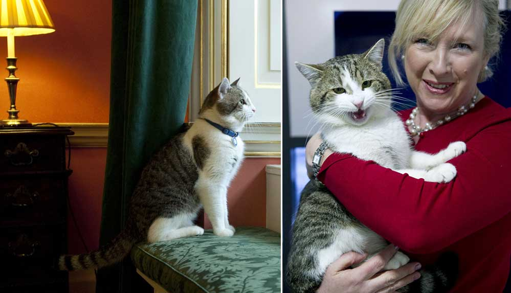 İngiltere'nin resmi fare avcısı kedi Larry, tam 10 yıldır görevinin başında