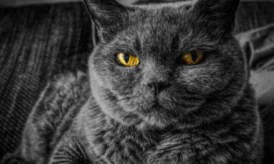 Kedilerin en sık sergilediği 6 davranışı bilim açıkladı