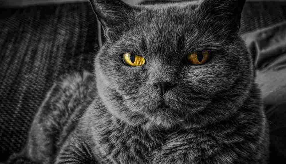 """""""Karantina nedeniyle kediler insanlardan bıktı"""""""