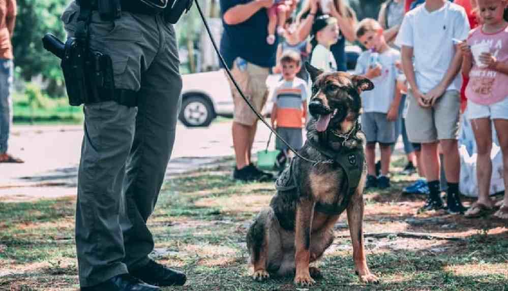 Polis köpekleri ve atlarına emeklilik müjdesi