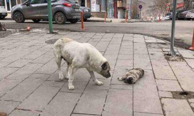 Sokak köpeği, ölen yavrusunun başında bekledi