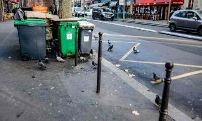 Trafik gürültüsü yüzünden kuşlar risk altında