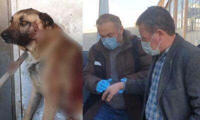 Tüfekle köpeği yaraladı: 'Gören de adam öldürdük sanır' sanır dedi!