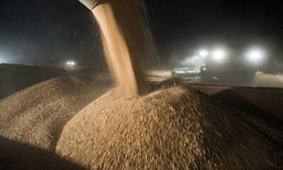 Türkiye, 1.4 milyar nüfuslu Çin'den daha fazla buğday ithal etti
