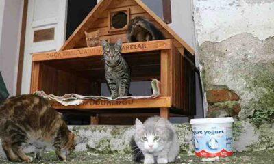 Çanakkale'de sokak kedileri kısırlaştırılıyor