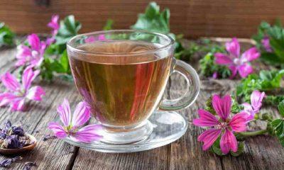 Ebegümeci Çayı Faydaları Nelerdir? Ebegümeci Çayı Nasıl Hazırlanır, Neye İyi Gelir?