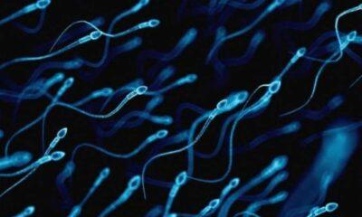 İnsan nesli tehlikede: 2045 yılında sperm sayısı '0' olacak