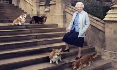 Morali bozulan Kraliçe II. Elizabeth'e iki köpek yavrusu getirildi