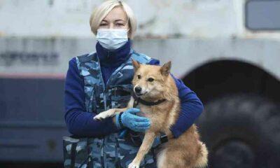 Narkotik köpekleri, Covid-19 vakalarını testlerden bir hafta önce tespit edebiliyor