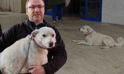 'Pamuk' kalp krizi geçiren sahibini 14 gün hastane kapısında bekledi