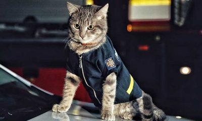 Ukrayna'da donmaktan kurtarılan kedi 'Chivas', itfaiye ekibine katıldı