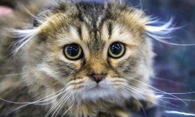 Yavru kediyi streç filme sarıp fotoğrafını paylaşan kişi tutuklandı
