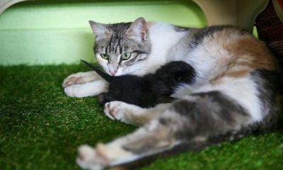 Anne kedi ile minik yavrusuna mescit 'yuva' oldu