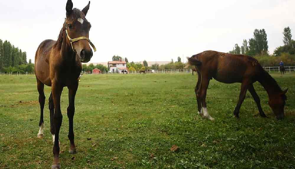"""""""Atlardan sucuk yapıldı"""" iddiasına yanıt geldi"""