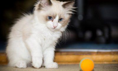 Bir kedi Covid-19 sebebiyle hayatını kaybetti