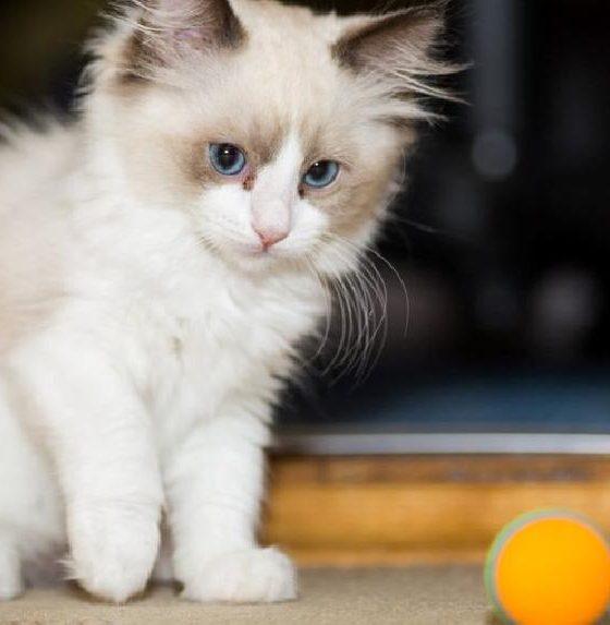 Gürültü ihbarı alan polis adrese gitti; ev sahibi evde yoktu: Müziği kedi açmış