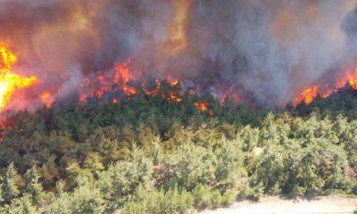 Bir yılda 20 bin 971 hektar orman zarar gördü
