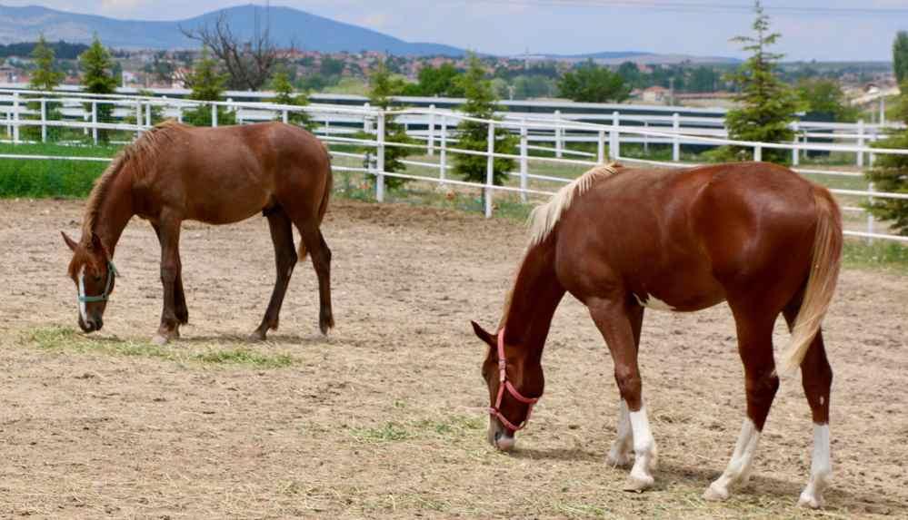 """Boğazlıyan 'kayıp atları' araştırdı: """"80 at satıldı, kalanlar kuşbaşı-kıyma oldu"""""""