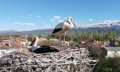 Erzincan'da köylülerin özel misafiri leylekler 17 yıldır aynı yuvada kuluçkaya yatıyor