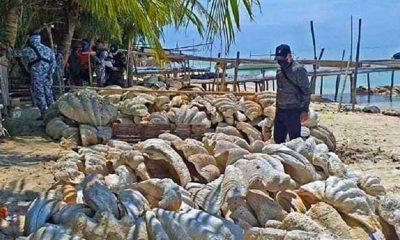 Filipinler'de 25 milyon dolar değerindeki midye kabuklarına el konuldu