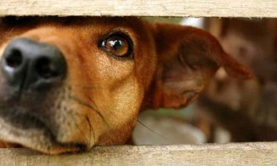 İngiltere'de hayvanlara kötü muamelede hapis cezası 6 aydan 5 yıla çıkarıldı