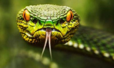İnsanlar da bir gün yılanlar gibi zehirli olabilir