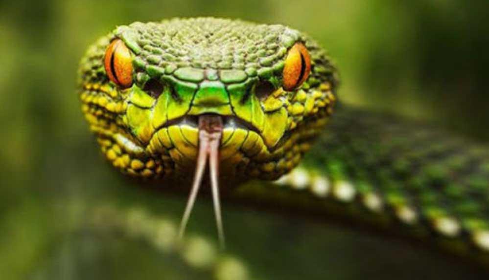 Rüyada yılan görmek ne demek? Rüyada yılan sokması ne anlama gelir?