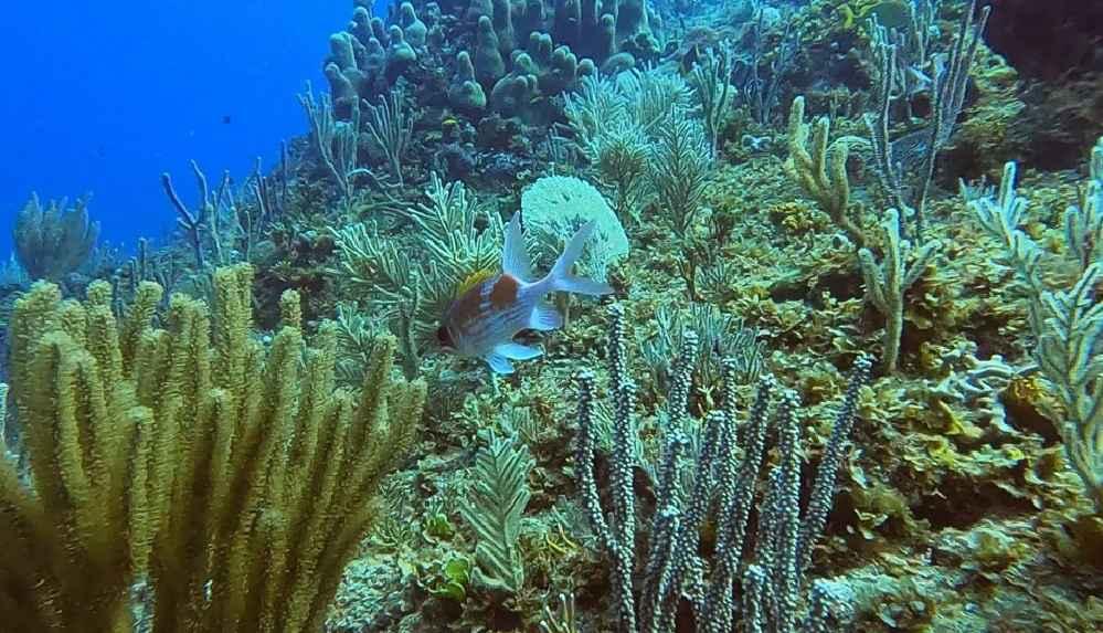 İklim değişikliği deniz canlılarının sayısını yarı yarıya düşürdü