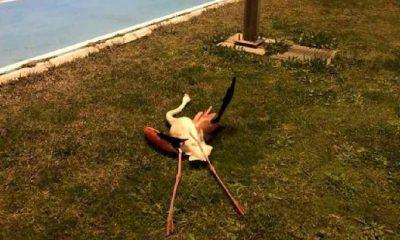 İzmir'in Bayraklı ilçesindeki flamingoların ölüm sebebi belli oldu